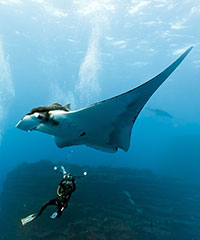 Manta Ray Night Dive & Snorkel